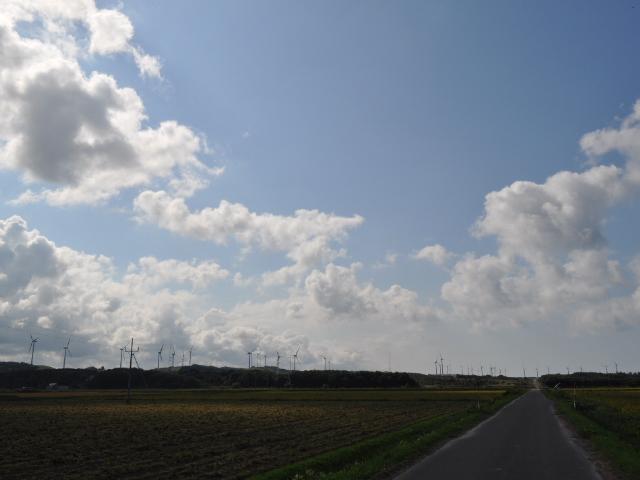 風景:風車天国