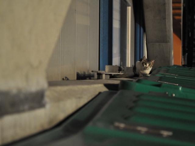 動物:猫の見つめるもの