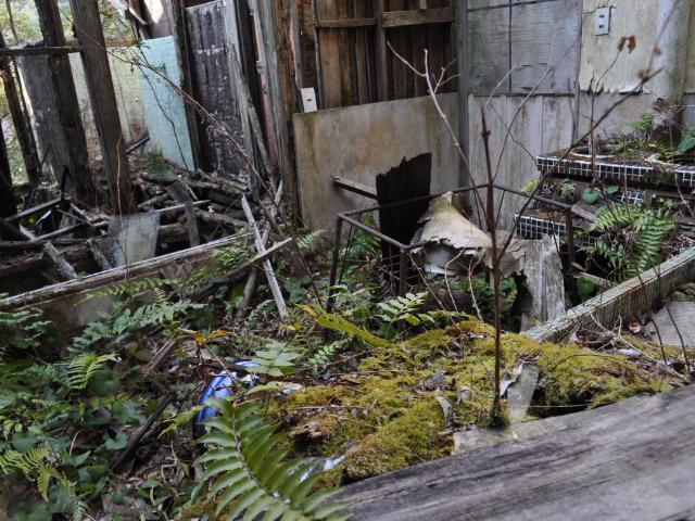 廃墟@とある紀州路の廃屋探索