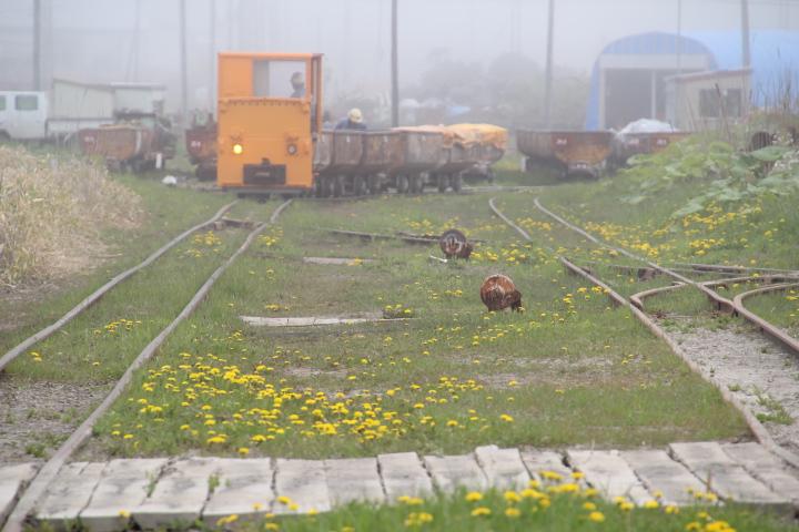 鉄道@とある炭鉱の構外機関車 (旧型の機関車については「編集長敬白」を参照)