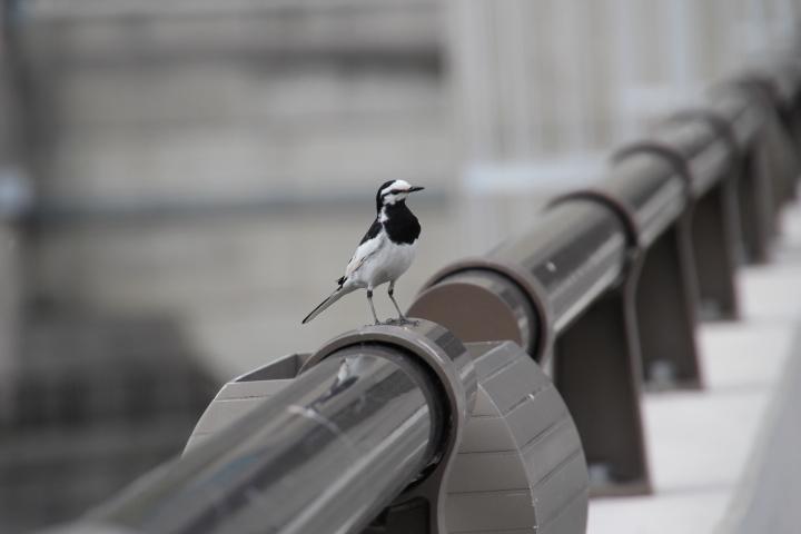 鳥ダム欄干
