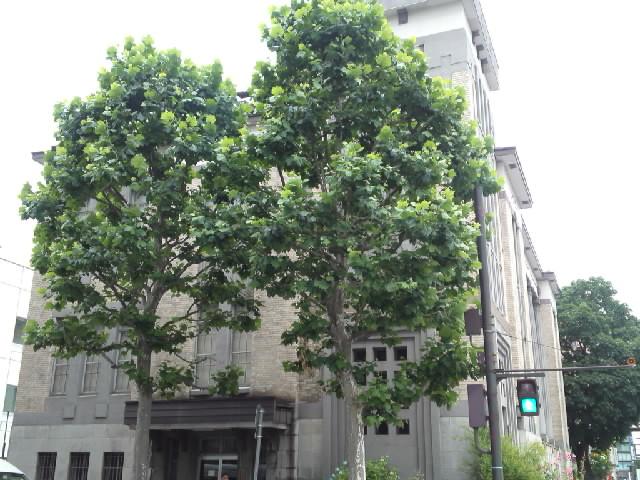 今日の近代建築(図書館) 銀行だった建物が図書館に再利用されて今は図書館付属の倉庫になっています