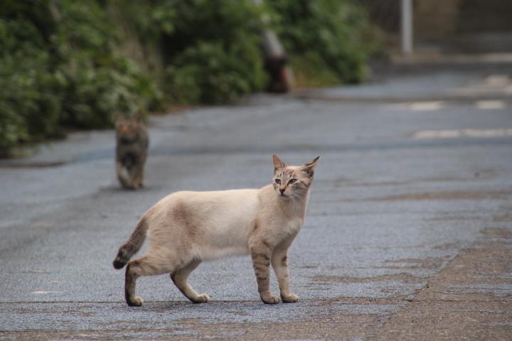 #Jheritage長崎産業遺産視察勉強会 ネコだらけの食堂