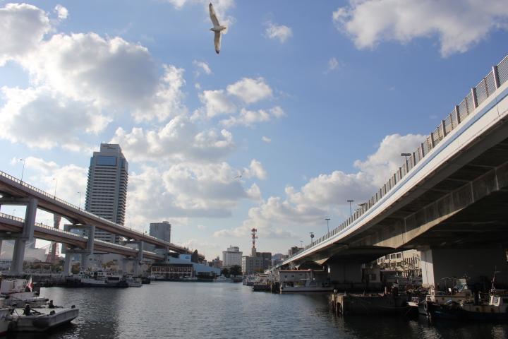 二階建て橋脚と鳥