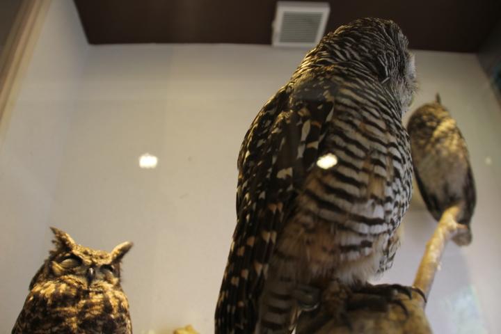 木場駅前の猛禽類カフェ「鳥のいるカフェ」の写真2