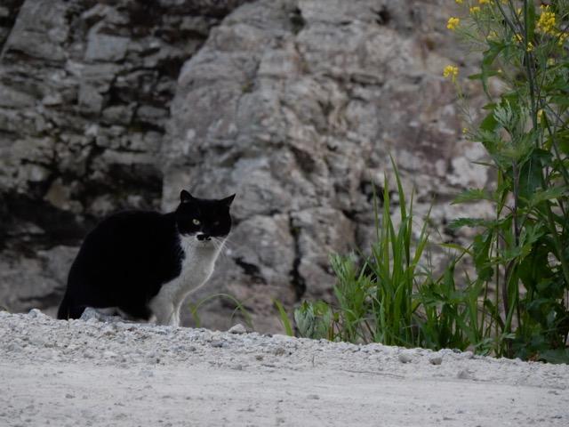 新名神の山間部の工事現場に猫が増えてた、武庫川だけにヌコ川なんつってな